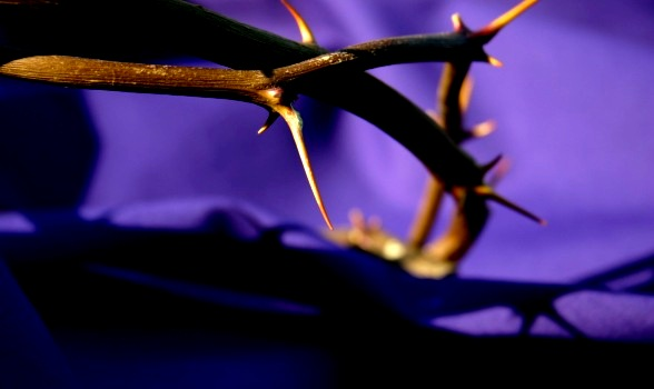 lent-thorns_purple