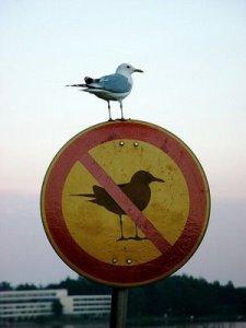 breaking-rules